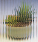 Anlin window reed obscure glass